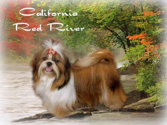 california red river