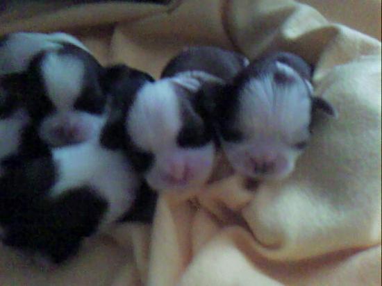 bebes athena et armenie 3 jours